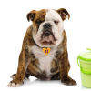 Bulldog with Compost
