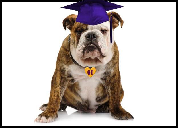 bulldog with graduation cap
