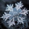 166c476e-fb6a-4087-bb63-870bbd47746d-131203_snowflake_lg