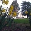 daffodilsjpg-100x100.jpg
